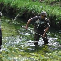 Pankefischer zählten Fische
