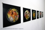 Art Laboratory Berlin - [macro]biologies ii: organisms suzanne anker, brandon ballengée, maja smrekar