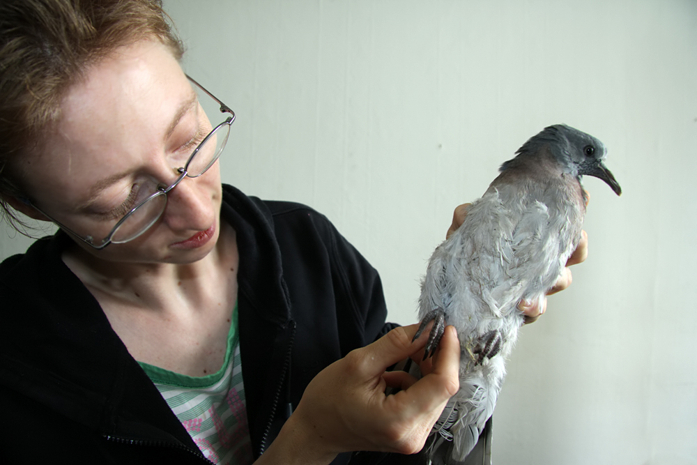 Nicole Fröhlich notfall Taube (2)