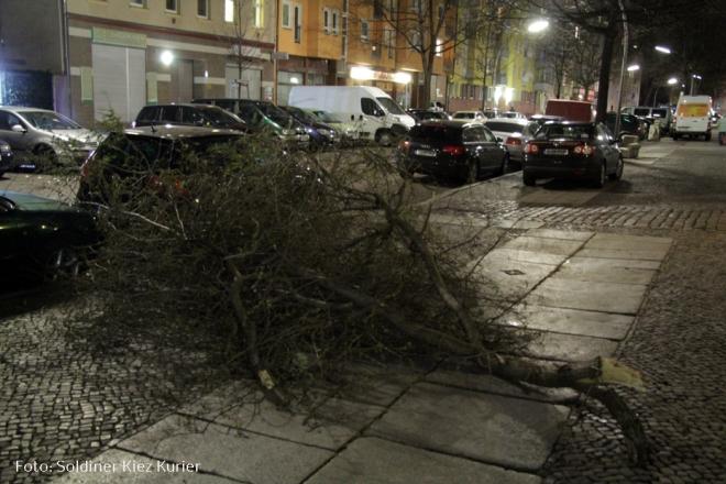 Sturmschaden Orkan Niclas im Solinder kiez (1)