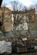 Himmelbeet Gemeinschaftsgarten Ruheplatzstrasse ecke Schulstrasse (5)