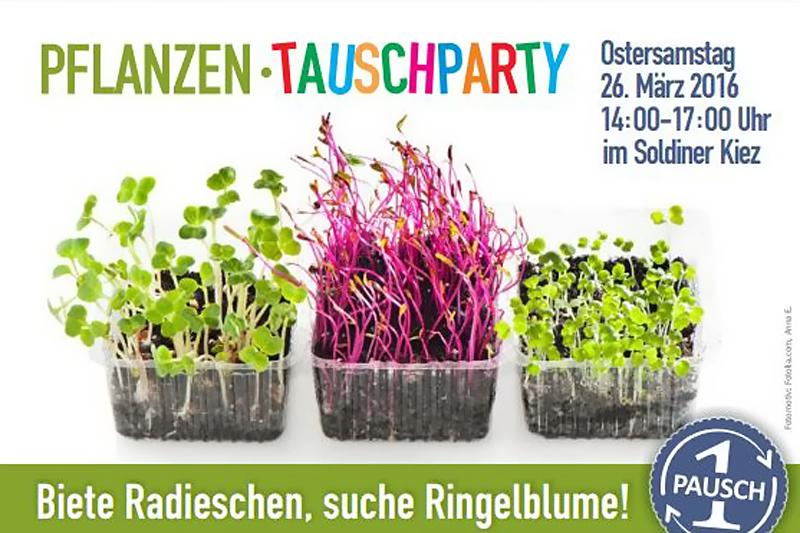 Pflanzentauschparty im Soldiner Kiez Gotenburger Straße2