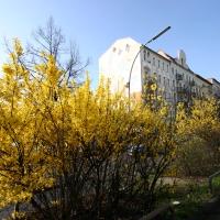 Soldiner Kiez Berlin Fotorundschau Frühling 2016