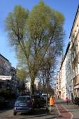Soldiner Kiez Frühling 2016 (2)