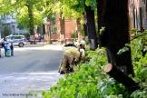 Feuerwehrfrauen zersägen umgefallenen Baum in der Nordbahnstraße (5)