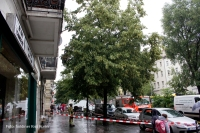 Feuerwehr entfernt morschen Ast in Prinzenallee (1)