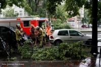 Feuerwehr entfernt morschen Ast in Prinzenallee (4)