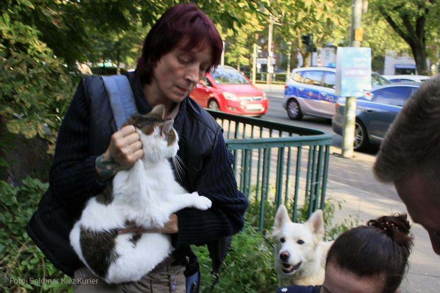 2 Katzen an der Panke ausgesetzt und gerettet soldiner Kiez (3)