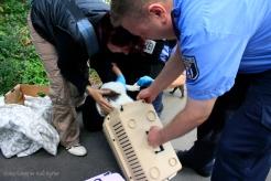 2 Katzen an der Panke ausgesetzt und gerettet soldiner Kiez (4)
