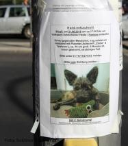 Hund entlaufen bitte um Hilfe