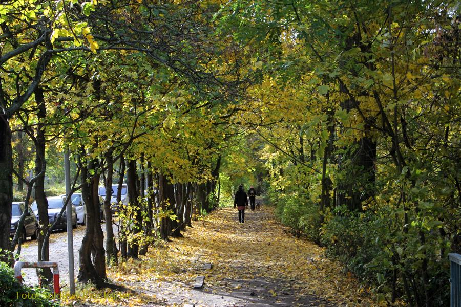 Herbst Foto im Soldiner Kiez (8).jpg