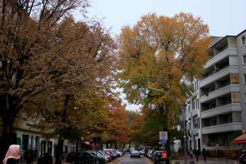 herbst-eichen-koloniestrasse-3
