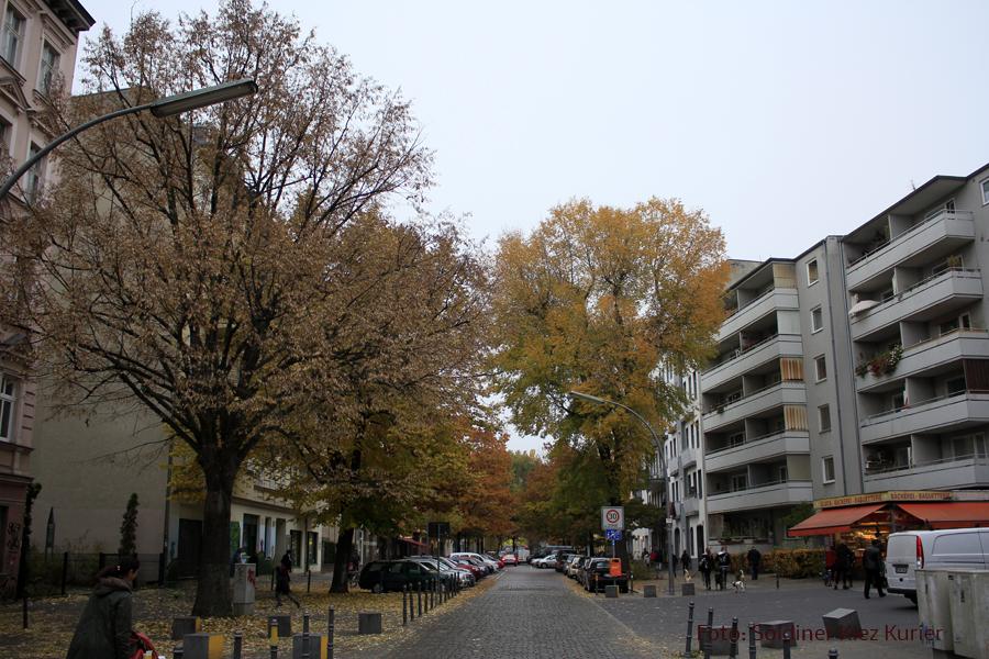 Herbst Eichen Koloniestrasse (4).jpg
