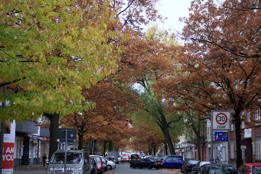 Herbst Eichen Koloniestrasse (5).jpg
