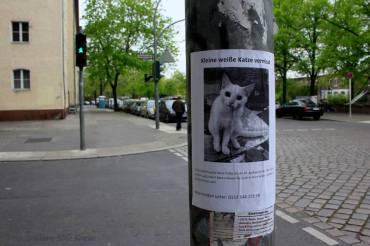 Katze Callas im Soldiner Kiez vermisst