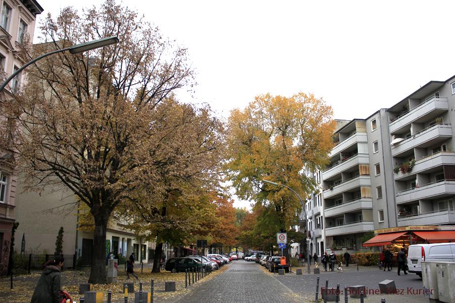 herbst-eichen-koloniestrasse-4 (1)