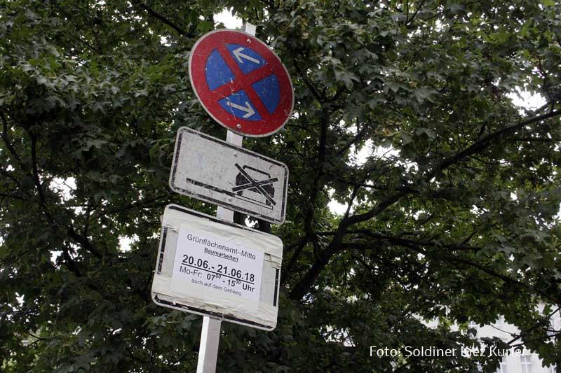 Baumfällung-gotenburger-ber