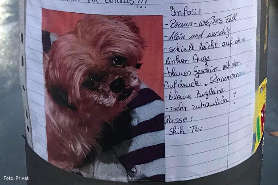 hund geklaut Osloer schwedenstraße