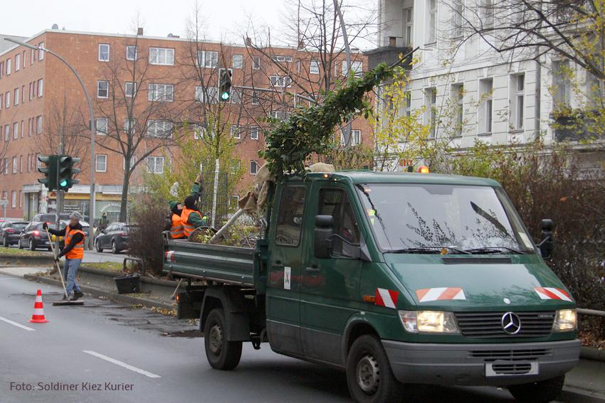 neue bäume prinzenallee (1).jpg