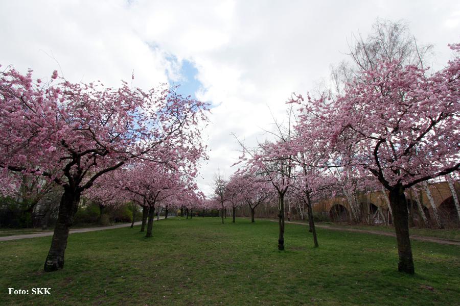 Frühling 2020 Soldiner Kiez (7)