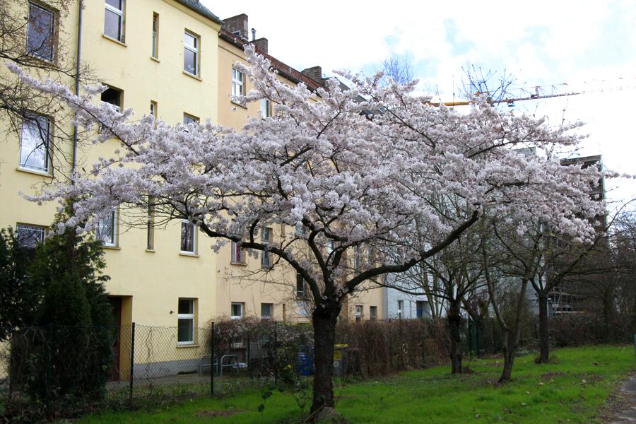 Frühling 2020 Soldiner Kiez (8)