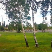 Große Fotoserie Mauerpark